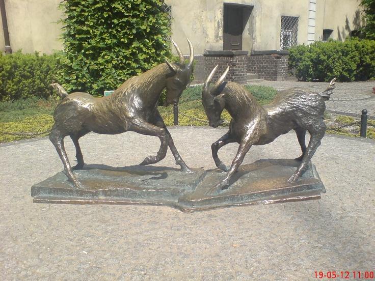 Poznan Poland, Koziołki na Placu Kolegiackim. [fot.Robert Dolicher]