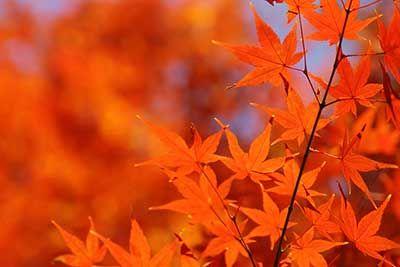 美しい紅葉の写真素材