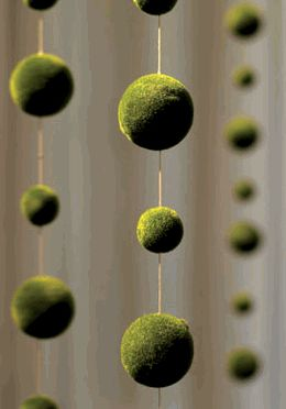 Moss ball garland from Save On Crafts. Alternative to crystal garland if we do manzanita branch centerpieces.