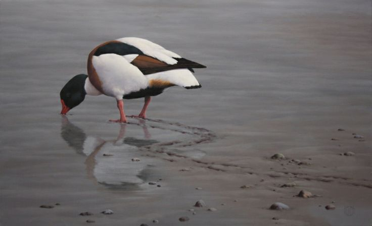 SHELDUCK by Terence O'Connell on ArtClick.ie Irish Wild Birds