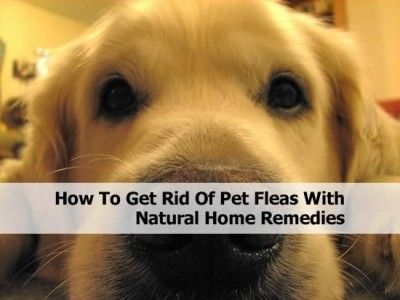 how to get rid of pet fleas with natural home remedies for my pets pinterest home natural. Black Bedroom Furniture Sets. Home Design Ideas