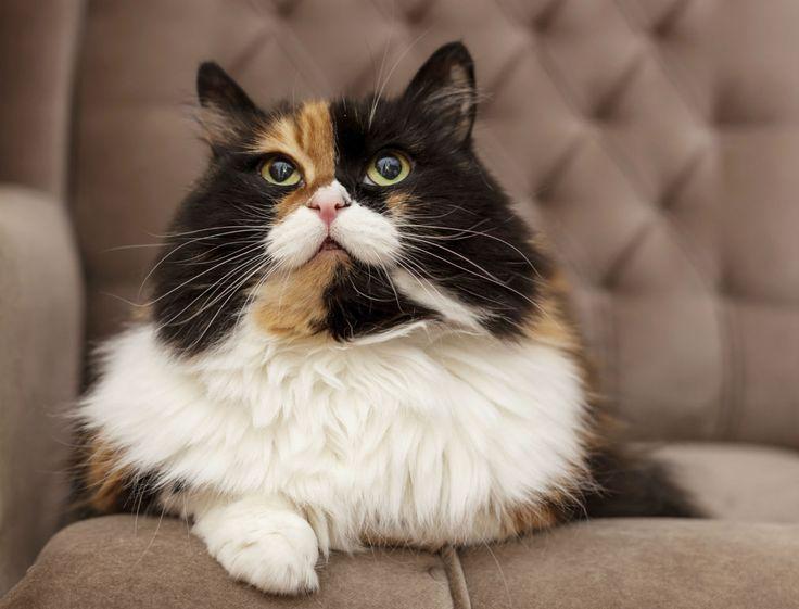 On constate un véritable papy boom chez les chats : nos amis félins vivent de plus en plus vieux. Les conseils du docteur vétérinaire Hugues Journaux pour...