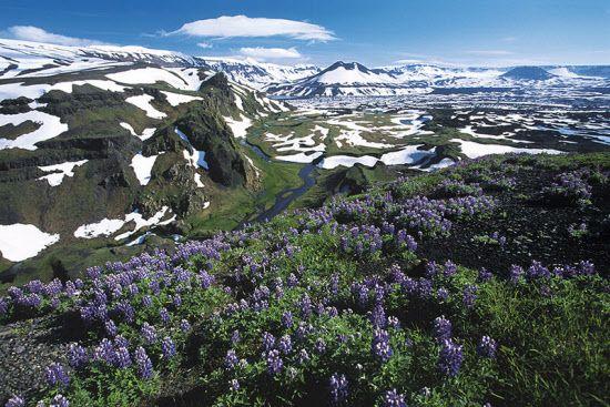 アリューシャン列島のウムナック島にあるオクモク火山。野に咲くルピナスの花が春の到来を告げる(写真:Michael Melford/National Geographic Creative)