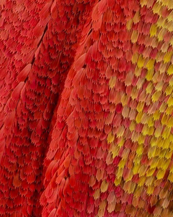 أجنحة الفراشات كما لم تراها من قبل باستخدام تقنية الماكرو صور مجلة تمر هندي Macro Photography Beautiful Macro Photography Macro Photos