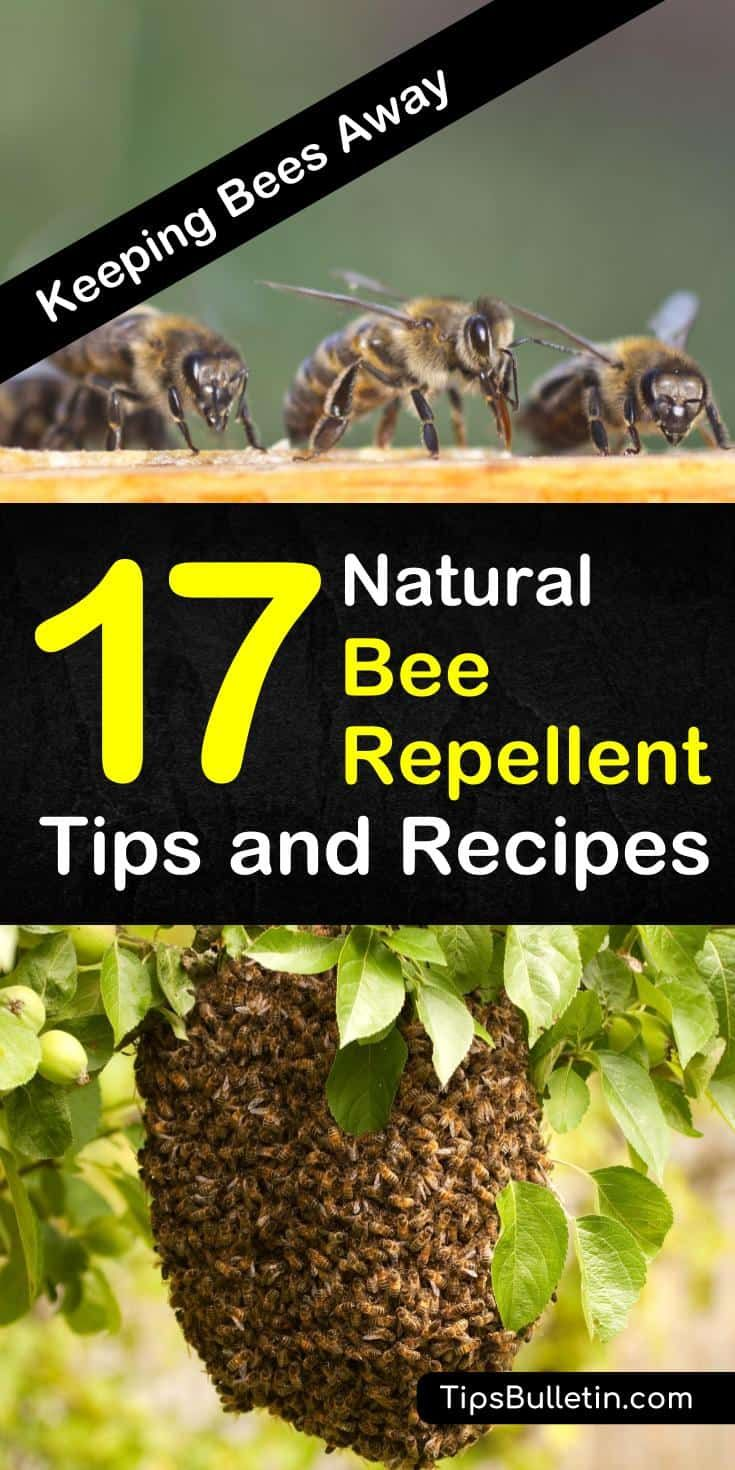 a1366bd5a3c422629d12a6082cd1f2ca - How To Get Rid Of Carpenter Bees Outside Naturally