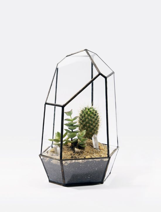 : Gardens Ideas, Glasses Terrarium, Little Gardens, Minis Gardens, Matthew Cleland, Inside Plants, Score Sold, Projects Sen, Geometric Shape