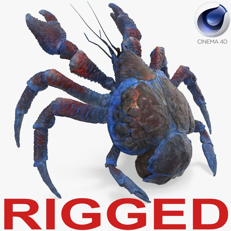 3D model Coconut Crab Rigged for Cinema 4D