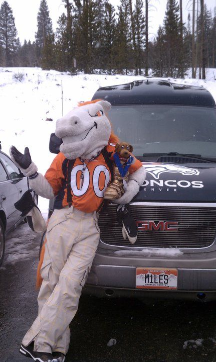Denver Broncos Miles the Mascot, just out for a drive, we're guessing?