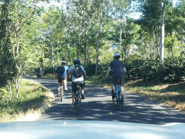 Coffee Plantation with Cycling Tour