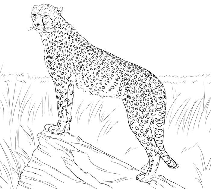 Cheetah Illustration Of Cheetah Head In Line Art Style Cheetah