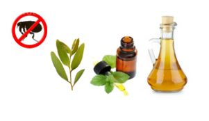 Natural flea repellents - eucalyptus, vinegar, apple cider vimegar, peppermint, & diatomaceous earth.