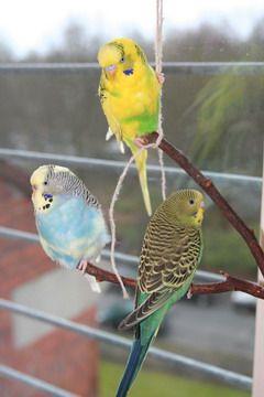 Can You Feed Wild Birds Parakeet Food