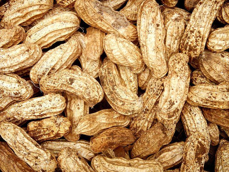 Peanut Photograph - Dirty Peanut by Emir Dayan Mende