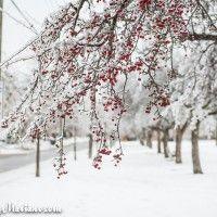 Winter Wonderland in Toronto 2013 www.raymariano.com