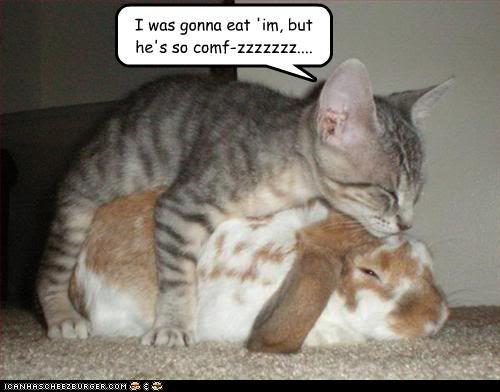 Precious: Funny Animals, Cuteness, Kitten, Animal Pictures, Bunny, Funny Cats, Funny Picture, Funnies, Bunnies