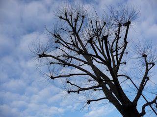 Jemina Staalon matkaploki: Puut ja tri Frank´n´furtherin taivas: Django, ja missä puuma matkustaa
