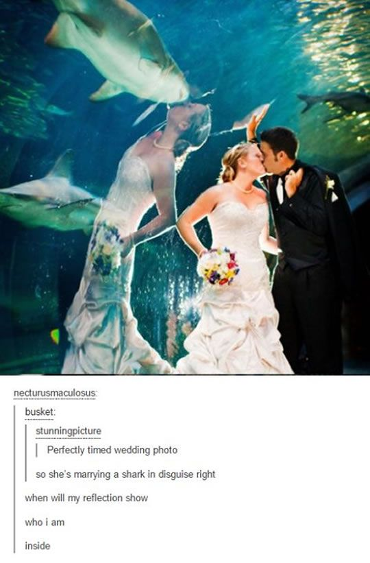 funny aquarium wedding photos shark photobomb