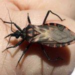 Mal de Chagas: nuevos ensayos médicos