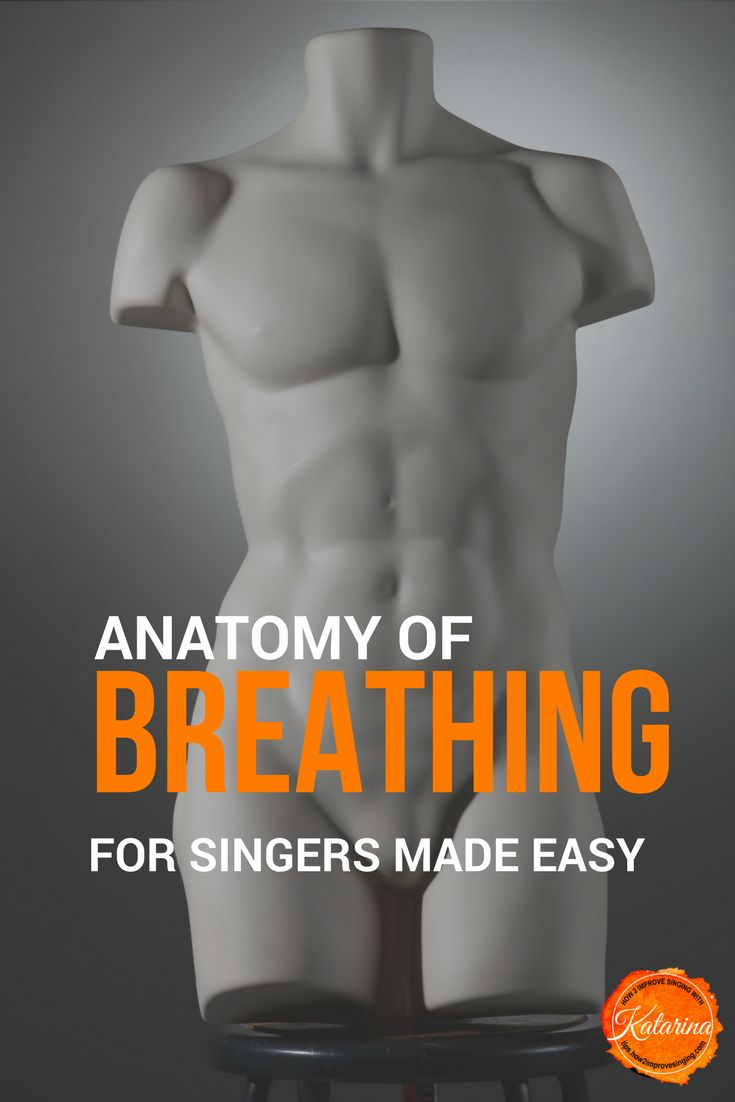 Breathe with ease and confidence when singing. Learn more about the anatomy of breathing for singers.