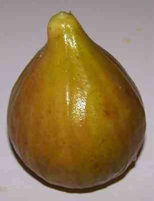 Figs: picking tips, facts and recipes: Great things to make from fresh figs. I have a HUGE fig tree and no idea what to do with them. Anybody want some?