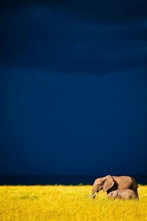 colour, deep blue sky, vibrant yellow, grey elephants by StarMeKitten