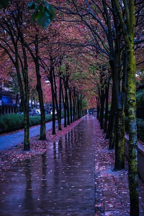 tassels:  Autumn rain..  (by Mauricio R.)