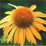 Wayside Gardens: Providing unusual, high-end plants and accessories for the serious garden enthusiast.