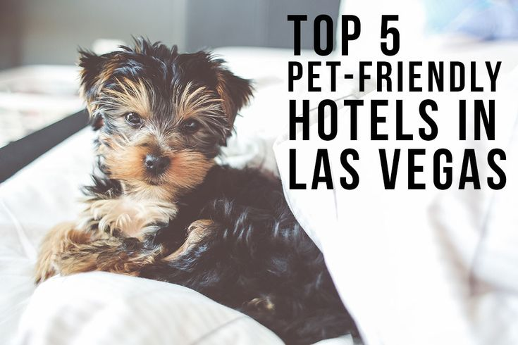 Off The Leash Luxury Awaits Pooches At Las Vegas Pet Friendly Resorts Travel Doggies And Dog