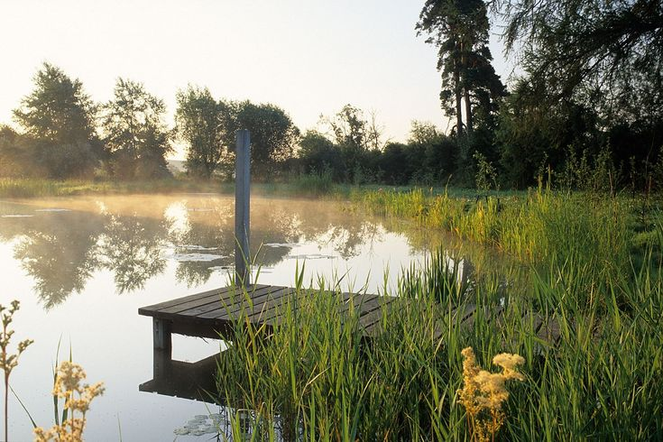 1000 ideas about pond design on pinterest fish ponds for Bass pond design