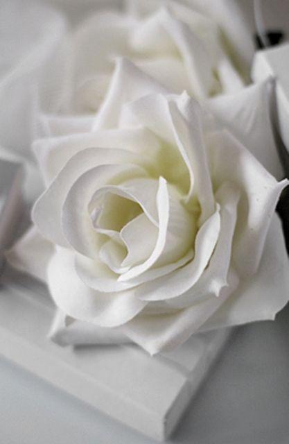17 meilleures id es propos de roses sur pinterest fleurs belles roses et roses pourpres for Parterre de roses photos