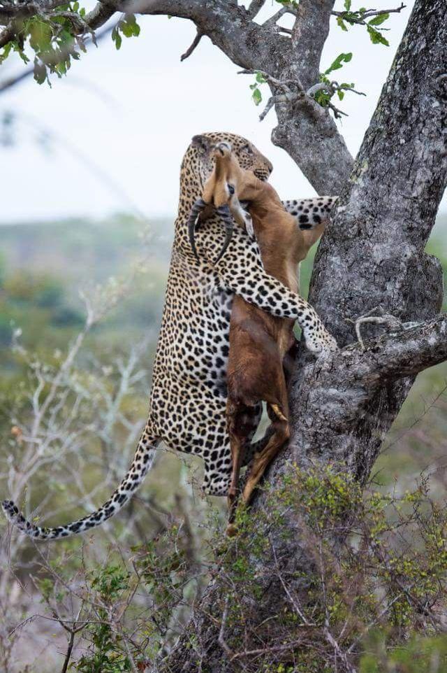 413 Best Images About Predators & Prey (Expressive
