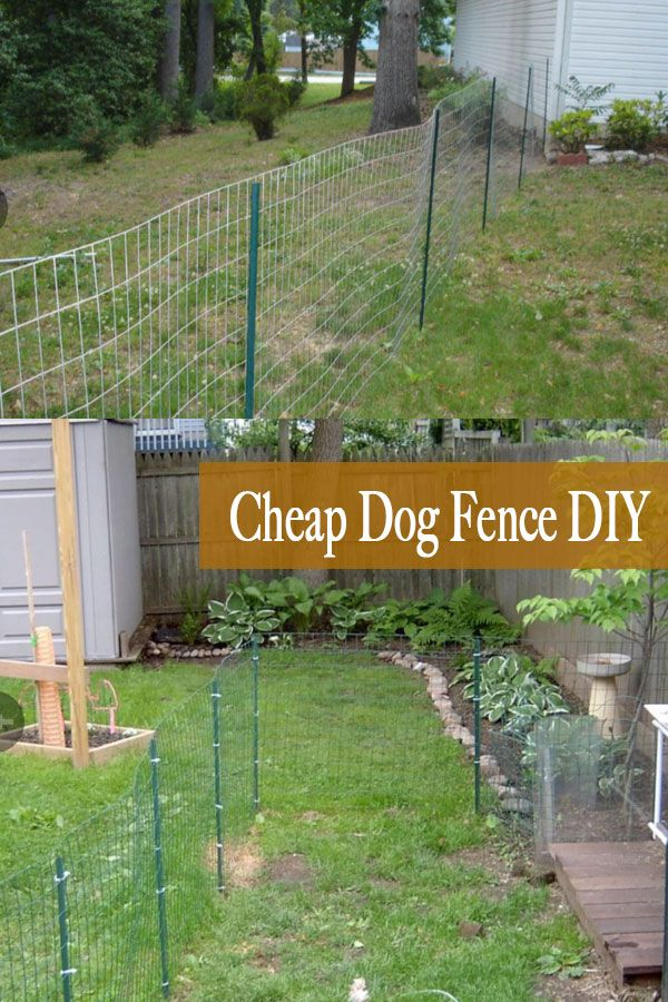 Cheap Material For Dog Fence Ideas In 2020 Diy Dog Fence Dog
