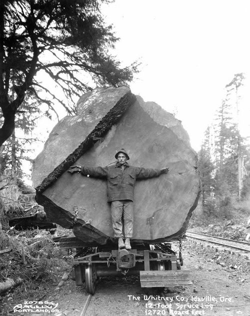 : Man stands in front of a 12 foot spruce log being transported on a railway car, Oregon, c. 1910