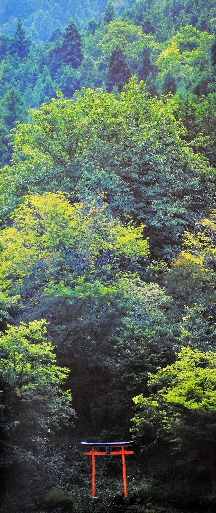 写真展「森の京都」 | wakasa15thfd