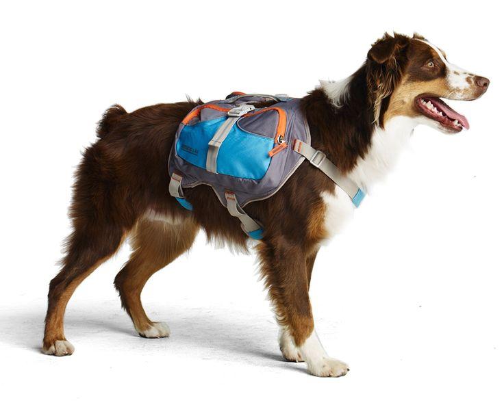 Cesar Millan Dog Whisperer Puppy Training Episode