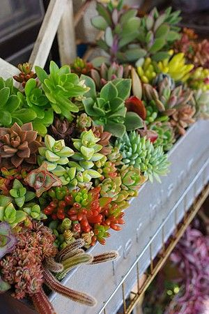 A window box filled with sun-loving, drought-tolerate succulents provides a great variety of different colors, shapes, and textures.