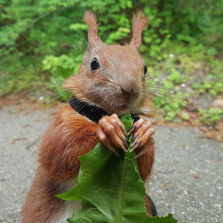 Squirrel nails