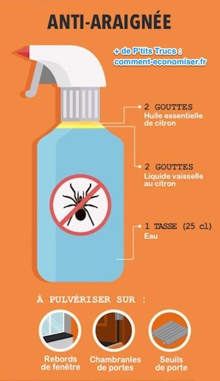 Les 25 meilleures id es de la cat gorie les araign es sur - Repulsif fourmi huile essentielle ...