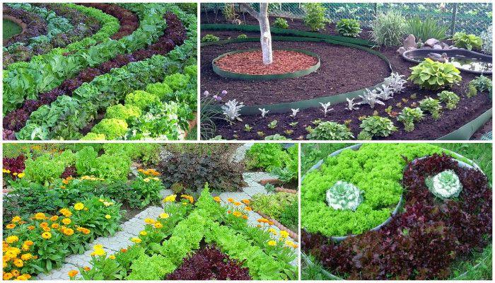 Красивый огород своими руками: советы и идеи