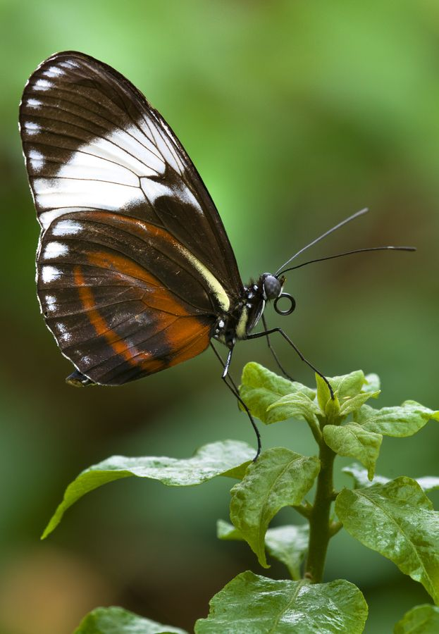 32 Best Pollinators And Insectious Things Images On