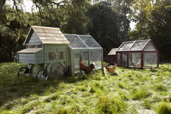 Don't have time or the tools to build your own coop? Williams-Sonoma soon to have you covered with mail order chicken coops.
