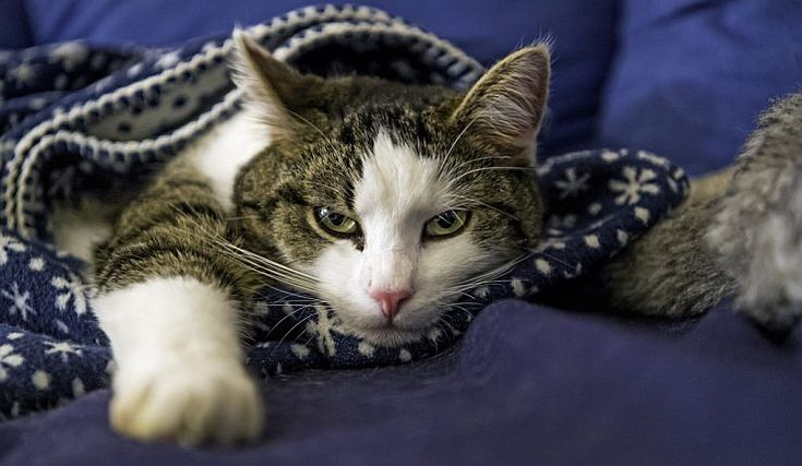 6 Ways to Protect Your Cats & Yourself from Cat Scratch Disease