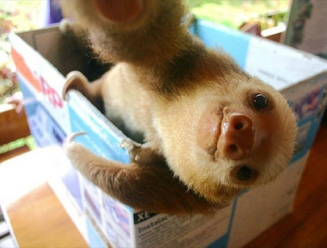 Best Selfie By Animals Images On Pinterest - The 21 best animal selfies of all time