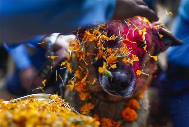Mintha büszke lenne rá :)  #kutya #dog #kukurtihar #kutyabaráthelyek
