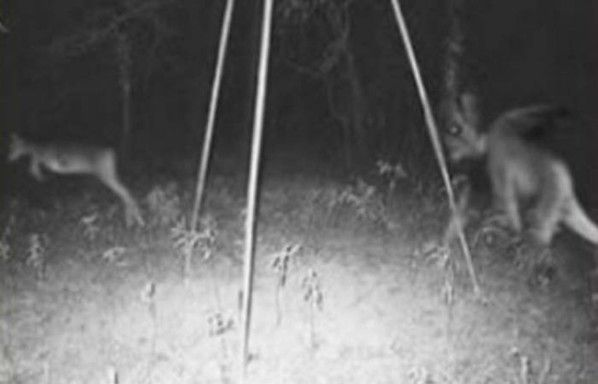 Gallery....These Real Pictures Captured By Hunters Are Freaking Me Out  All of these photos were taken by motion-activated cameras hidden in the woods.