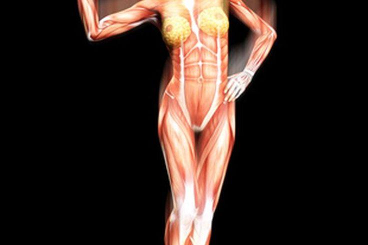 ¿Cuál es la función del sistema muscular?   Muy Fitness