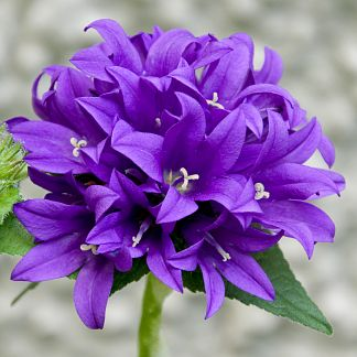Image result for flower for