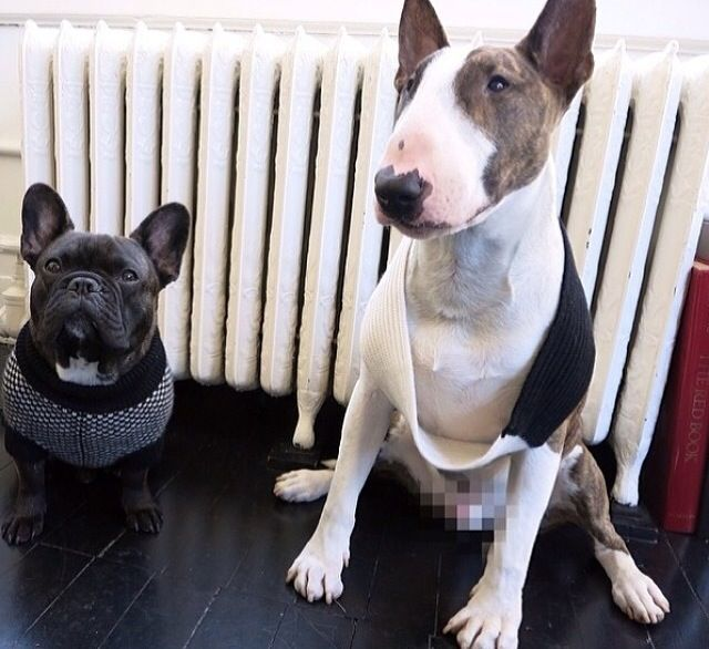 Marc Jacobs pups Neville and his bestie Charlie wearing Ruby Rufus cashmere