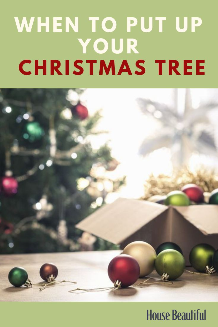 Is it too early to put your Christmas tree up in November?   Christmas tree, Christmas ...