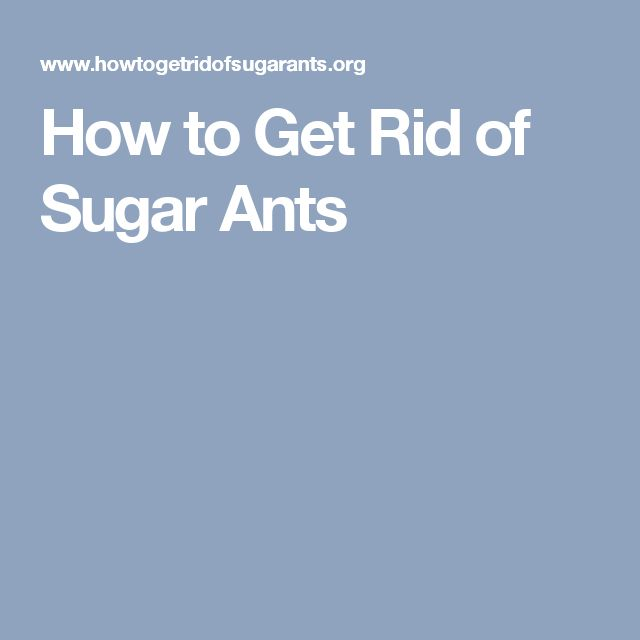 15 Must See Sugar Ants Pins Homemade Ant Killer Borax For Ants And Ant Remedies